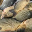 Как се избира риба за Никулден