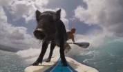 Прасе, което обича да се вози на сърф