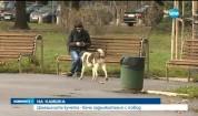 Домашните кучета - вече задължително с повод (ОБЗОР)