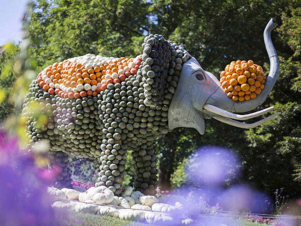 - Слон от тикви пред бароковия замък в Лудвигсбург близо до Щутгарт. Всяка година поклонници на зеленчука се стичат на изложението да видят огромната...