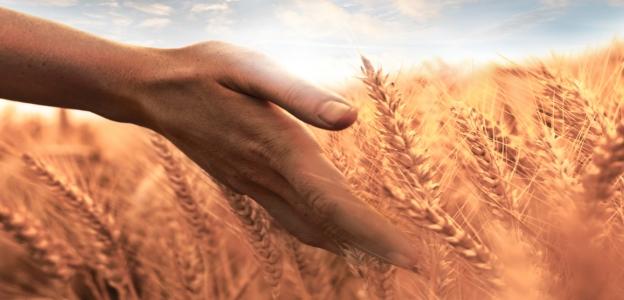 Глутенът е вид протеин, намиращ се в пшеницата, ечемика, овеса и ръжта