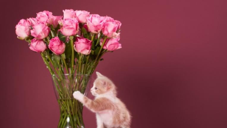 рози цветя ваза