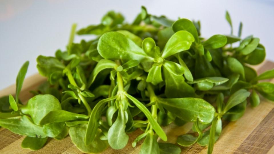 Плевел, билка или зеленчук – непознатата тученица