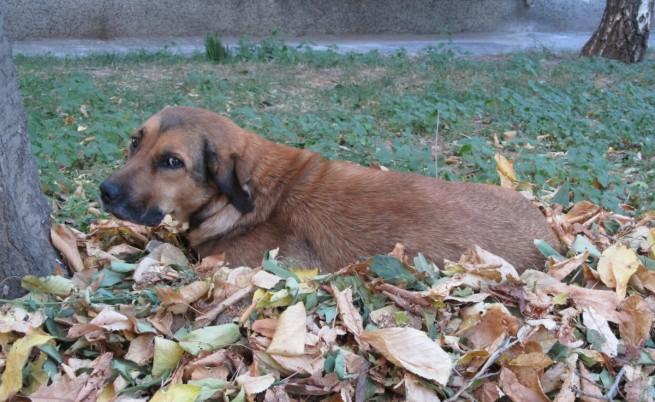 Дете от Румъния спасява кучета чрез