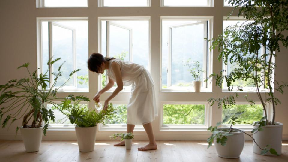 Да отглеждаме целина и лук, вместо цветя у дома