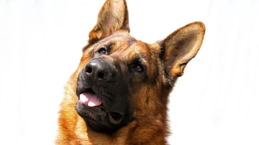 Кучета откриват рак на простатата