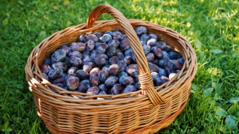 синя слива кошница плод
