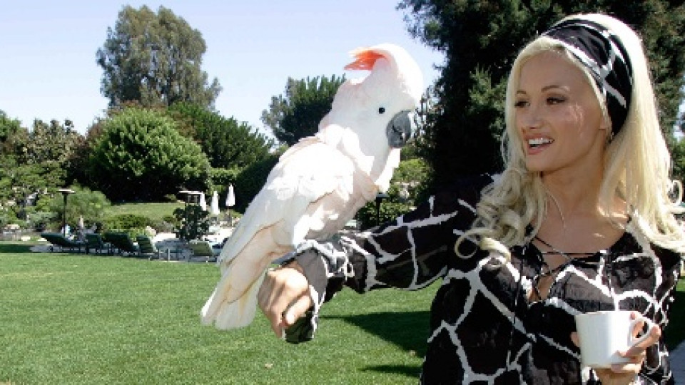 Един от говорящите папагали обитаващи имението на Хю Хефнър в компанията на бившата му приятелка Холи Мадисън
