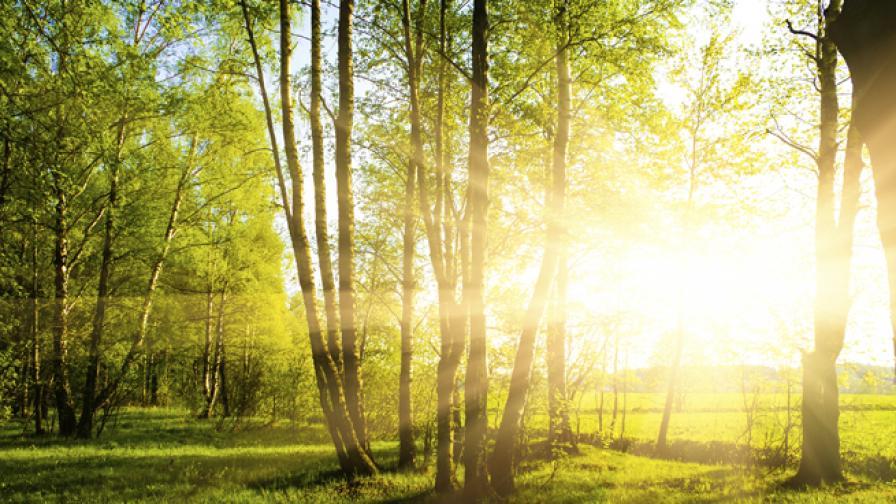 ЕК нареди България да анулира част от заменките на гори