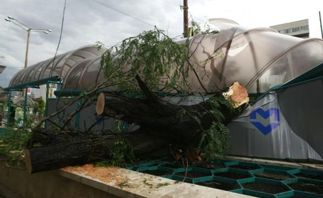Нова буря в страната повали дървета и затрудни движението