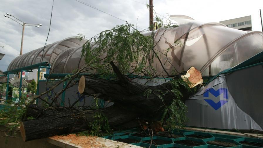 """На обръщалото на трамвай номер 20, край булевард """"Тодор Александров"""" падна огромно дърво върху релсите и навеса на спирката на метрото"""