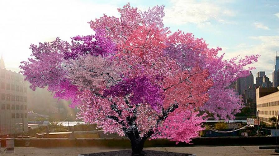 """""""Магическо"""" дърво ражда 40 различни вида плодове"""
