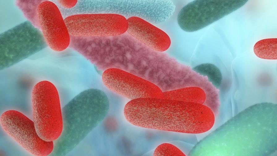 Компютърна илюстрация на бактерията салмонела, която причинява салмонелоза