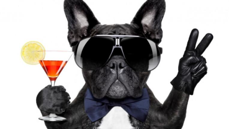 куче коктейл забавно смешно почивка