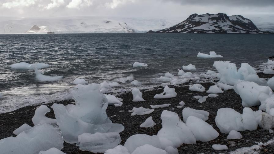 Условията на живот в Южния океан са сурови
