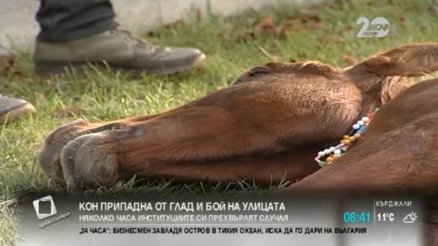 Кон припадна от немощ, минувачи извикаха ветеринар