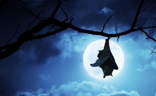 Прилепите-вампири имат тайна грижовна страна
