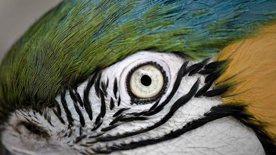 Папагал навърши 100 години