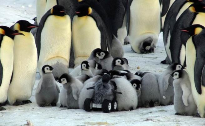 Учени внедриха робот сред пингвини