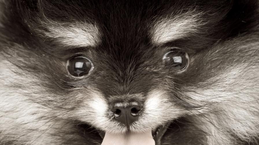 Куче хипнотизира хора (видео)