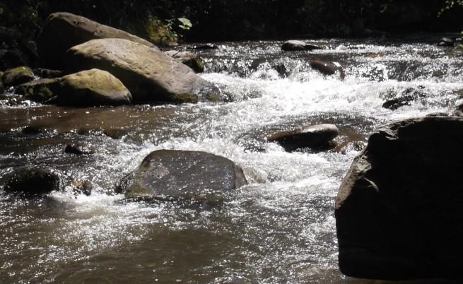 Мъртва риба изплува в река Луда Яна