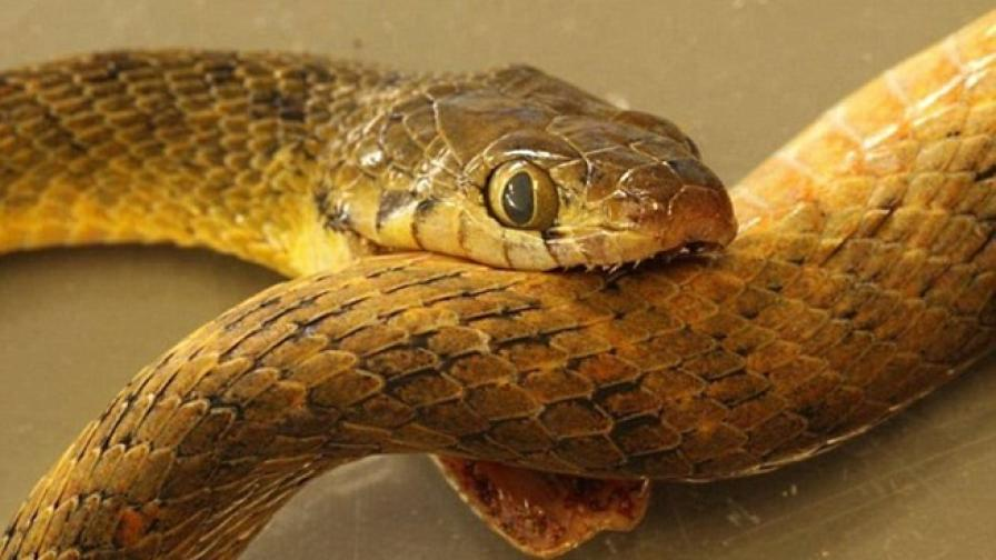 Самоубилата се змия