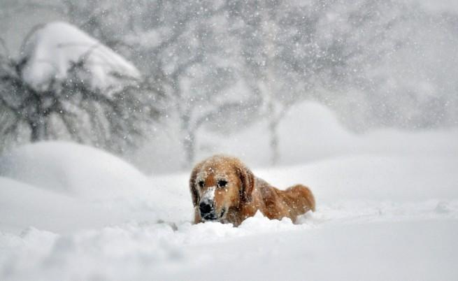 10 жертви на снежния ад в САЩ, очаква се дъжд през уикенда
