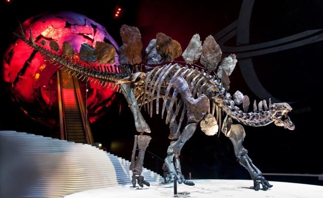 Учени ще разкриват тайните на стегозавъра