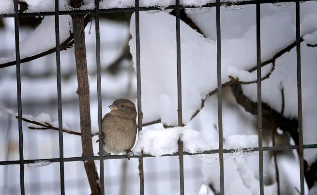 През януари ни чакат температури от -20 до +15