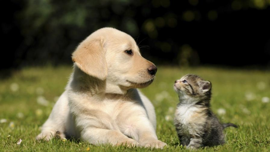 Куче или коте предпочитате? Какво говори това за вас