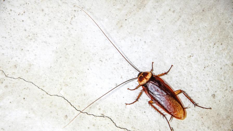Жена взриви тоалетна, за да убие хлебарка