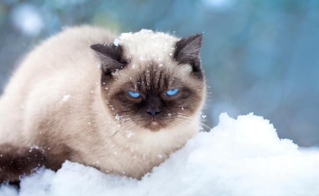 Очаква ни снежна неделя
