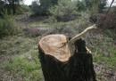 Унищожиха 180 дка гора край София