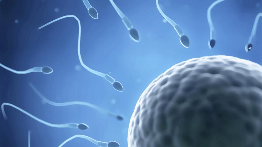 Учени: Ранното бащинство може да е рисково за децата
