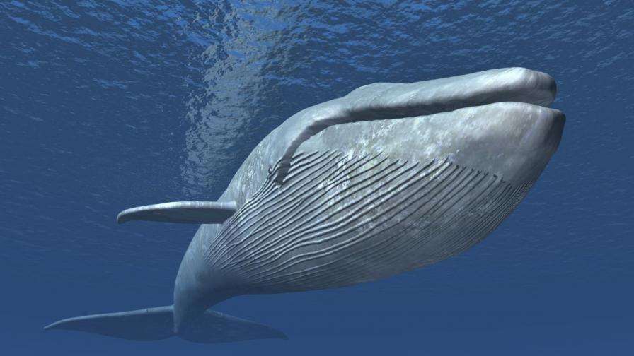 Морските създания стават все по-големи