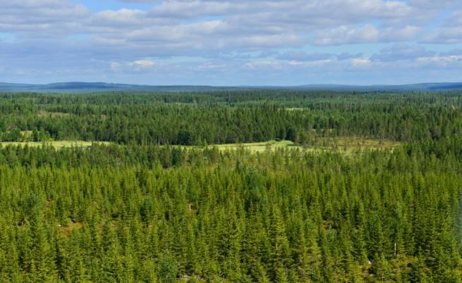 Северните пожари унищожили почти 1/4 от горите по света
