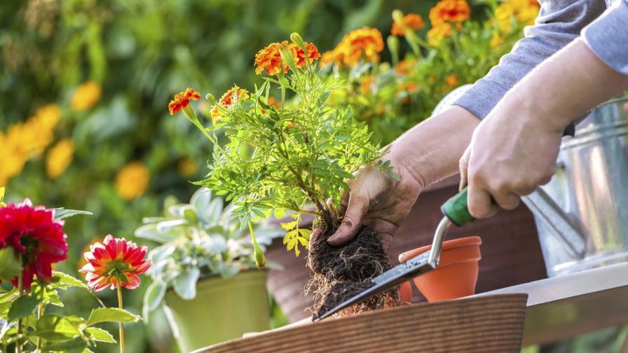Градинарството – ключ към добро здраве и дълъг живот