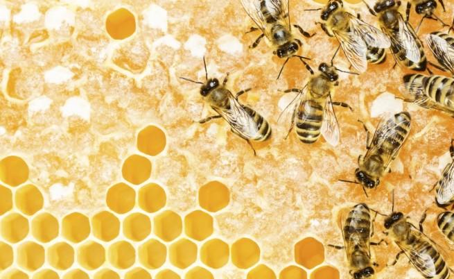 Стряскащо: Над 40% от пчелните рояци в САЩ измрели за година
