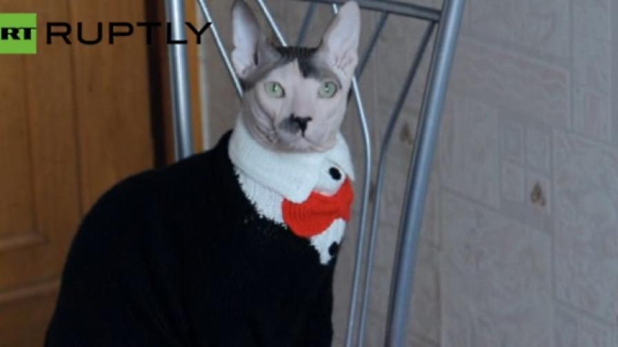 Хитлер се е преродил в руска котка (видео)