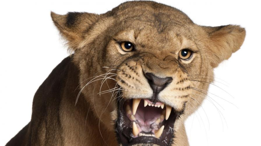 Лъв уби 22-годишна американка в сафари парк в РЮА