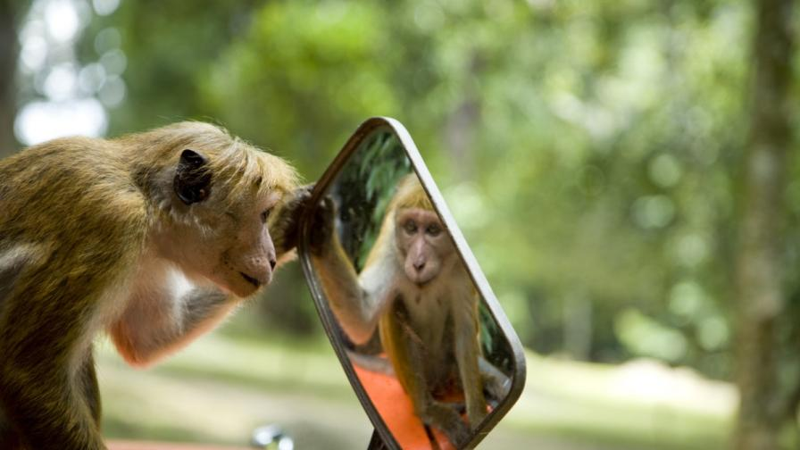Малки, сладки, крадливи маймунки (видео компилация)