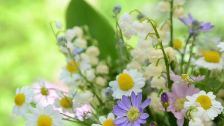 букет билки цветя