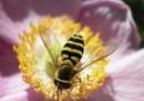 Малък дрон опрашва цветята вместо пчелите