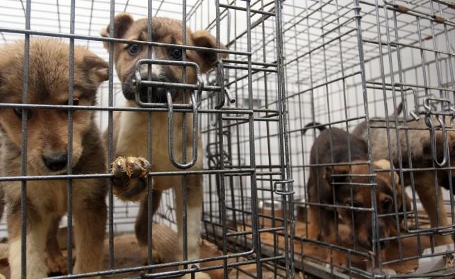 Активисти поискаха затваряне на приютите за бездомни кучета, приличали на концлагери