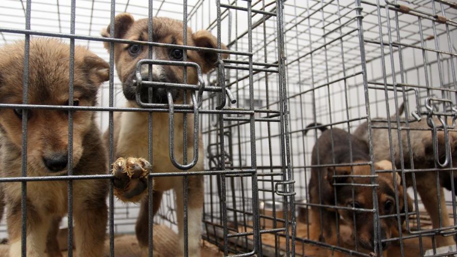 Активисти: Приютите за кучета са като концлагер