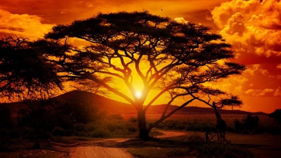 12 мисли: Мъдростта на Африка