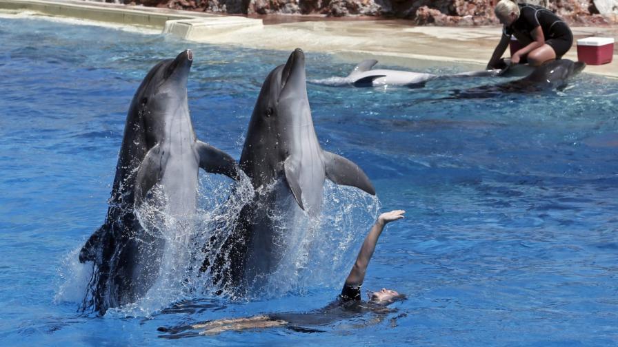 """Делфини в зоопарк """"Атика"""""""