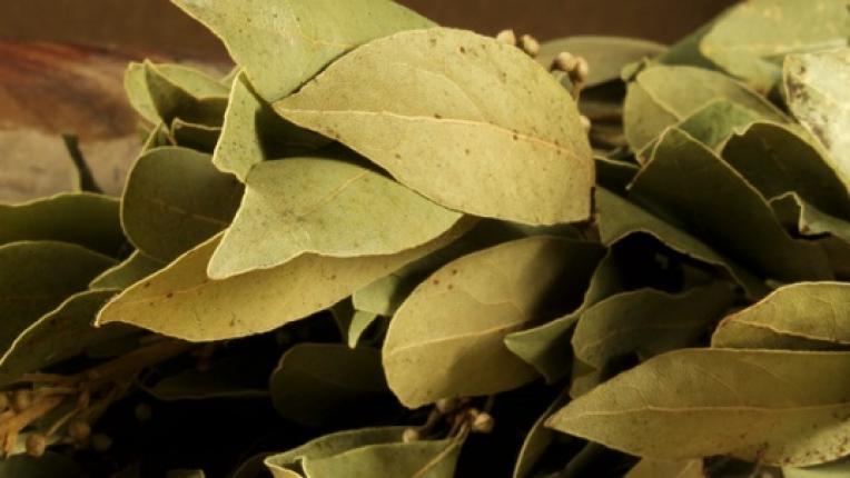 Да пречистим тялото си с дафинов лист