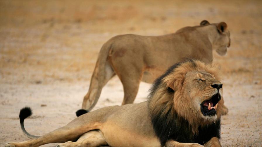 Убиецът на лъва Сесил съжалявал за постъпката си