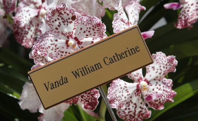 Цветето, кръстено на принц Уилям и съпругата му